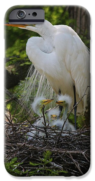 Baby Bird iPhone Cases - Great White Egret Mom and Chicks iPhone Case by Suzanne Gaff