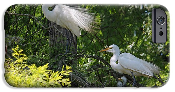 Baby Bird iPhone Cases - Great White Egret Mom and Dad and Chicks iPhone Case by Suzanne Gaff