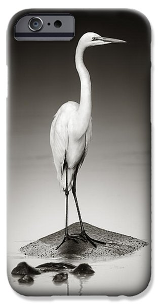 Togetherness iPhone Cases - Great white egret on Hippo iPhone Case by Johan Swanepoel