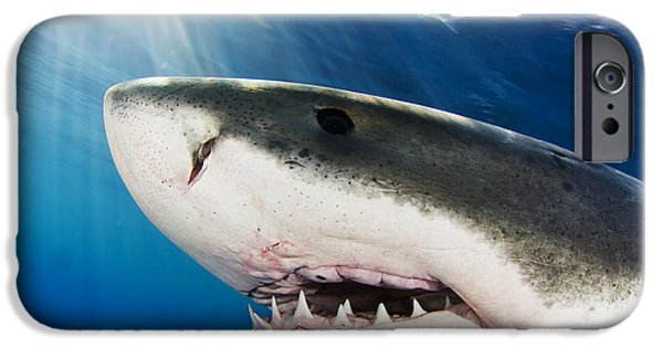 Underwater Photos iPhone Cases - Great White Shark Carcharodon iPhone Case by Dave Fleetham