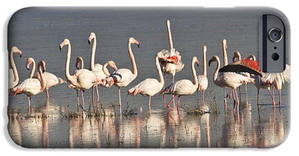 Sea Birds iPhone Cases - Greater Flamingos at Laguna de la Fuente de Piedra iPhone Case by Heiko Koehrer-Wagner