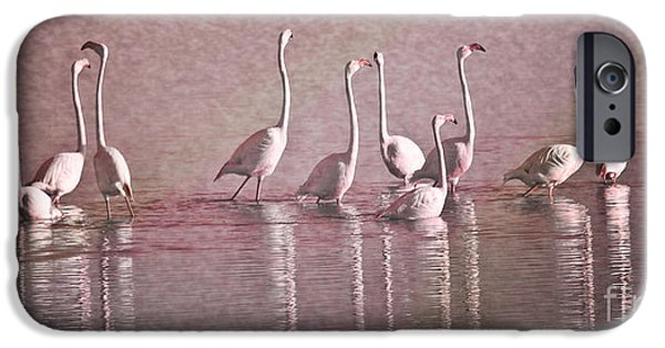 Biologic iPhone Cases - Greater Flamingos iPhone Case by Heiko Koehrer-Wagner