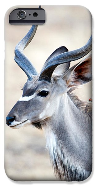 Reserve iPhone Cases - Greater Kudu Tragelaphus Strepsiceros iPhone Case by Panoramic Images