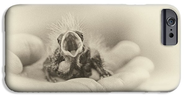 Baby Bird iPhone Cases - Greed iPhone Case by Caitlyn  Grasso