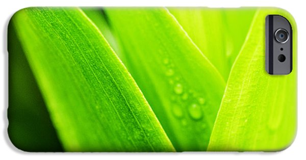 Simple Beauty In Colors iPhone Cases - Green and Wet iPhone Case by Thomas R Fletcher