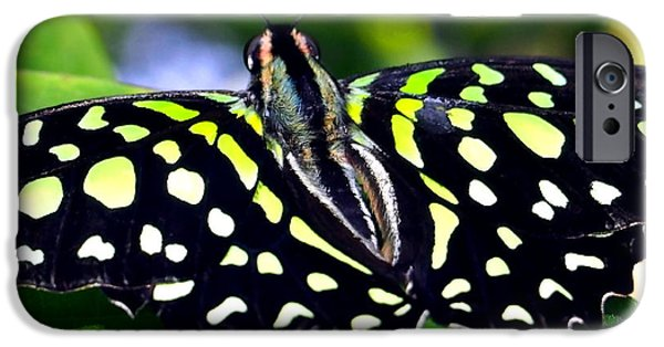 Flight iPhone Cases - Green and Yellow Spotted Butterfly iPhone Case by Amy McDaniel
