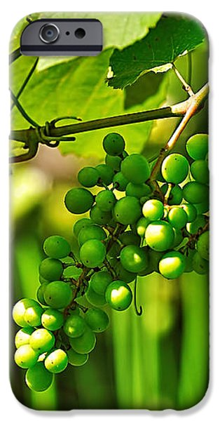 Green Berries iPhone Case by Kaye Menner