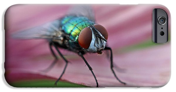 Animals Photographs iPhone Cases - Green Bottle Fly iPhone Case by Juergen Roth