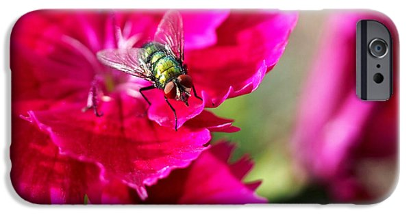 Insect iPhone Cases - Green Bottle Fly on Dianthus  iPhone Case by Rona Black