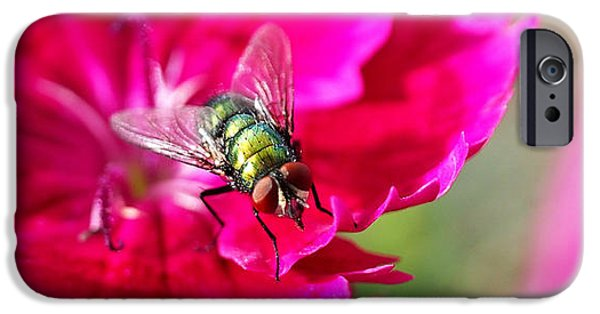 Insects iPhone Cases - Green Bottle Fly on Dianthus  iPhone Case by Rona Black