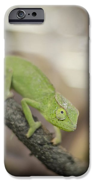 Chameleon iPhone Cases - Green Chameleon iPhone Case by Heather Applegate