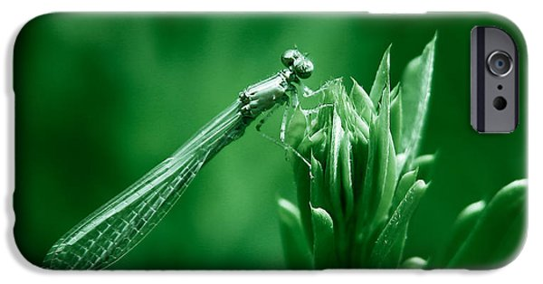 Recently Sold -  - Animals Photographs iPhone Cases - Green Damselfly iPhone Case by Shane Holsclaw