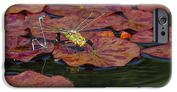 Dragonfly iPhone Cases - Green Darner Dragonfly with Friends iPhone Case by Rona Black