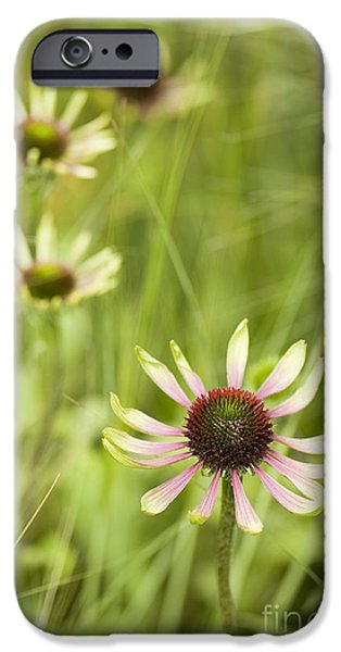July iPhone Cases - Green Envy iPhone Case by Anne Gilbert