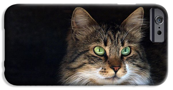 Purebred iPhone Cases - Green Eyes iPhone Case by Stylianos Kleanthous