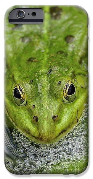 Alga iPhone Cases - Green Frog iPhone Case by Matthias Hauser