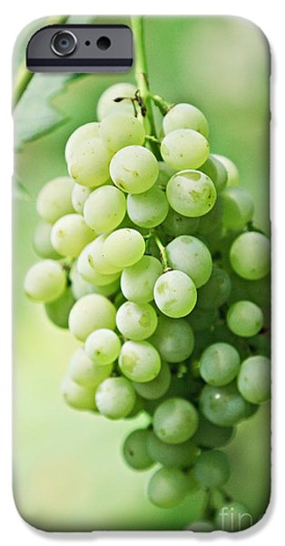 Berry iPhone Cases - Green Grapes iPhone Case by Dan Radi