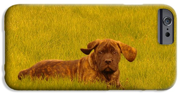 English Mastiff iPhone Cases - Green Grass And Floppy Ears iPhone Case by Jeff  Swan