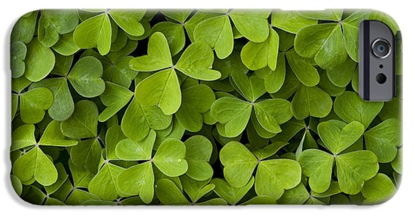 Local Attraction iPhone Cases - Green Ground Cover Sorrel iPhone Case by Jim Corwin