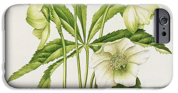 Botanical iPhone Cases - Green Hellebore iPhone Case by Sally Crosthwaite