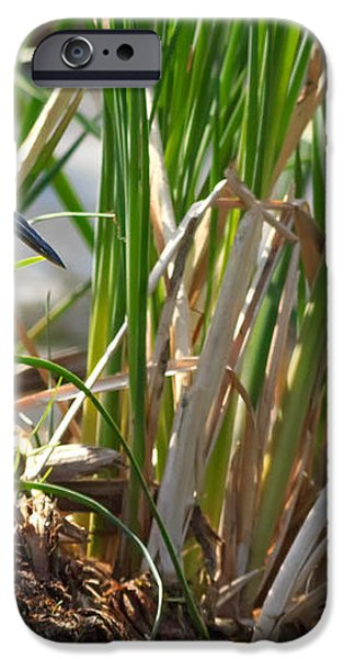 Green Heron FIshing iPhone Case by Kathleen Bishop
