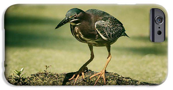 Algal Photographs iPhone Cases - Green Heron In Green Algae iPhone Case by Robert Frederick