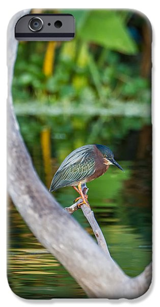 Animal iPhone Cases - Green Heron on a Crystal Clear Lake iPhone Case by Andres Leon