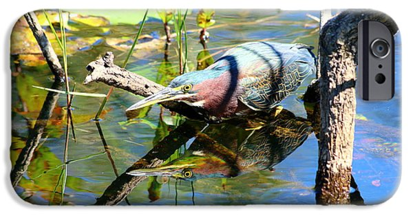 United States iPhone Cases - Green Heron Stalking its Prey iPhone Case by Christiane Schulze Art And Photography