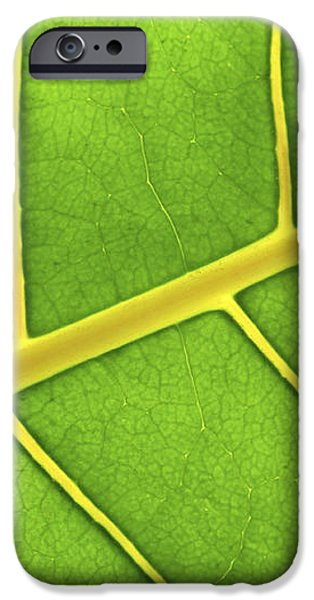 Green leaf close up iPhone Case by Elena Elisseeva