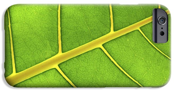 Sunlit iPhone Cases - Green leaf close up iPhone Case by Elena Elisseeva