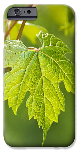 Vineyard Prints iPhone Cases - Green Leaf Fox Grape iPhone Case by Christina Rollo