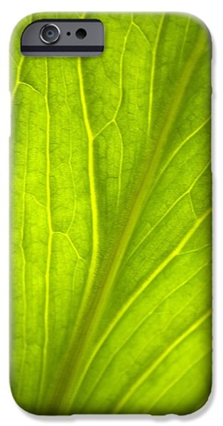 Contemporary Abstract iPhone Cases - Green Leaf Nature Abstract iPhone Case by Christina Rollo