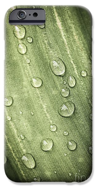 Green leaf with raindrops iPhone Case by Elena Elisseeva