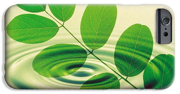 Nature Abstracts iPhone Cases - Green Leafy Branch Superimposed iPhone Case by Panoramic Images