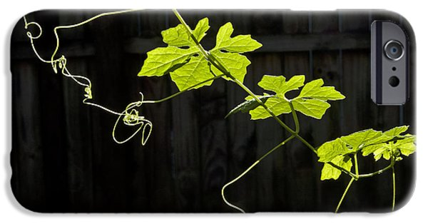 Philodendron iPhone Cases - Green leaves iPhone Case by Roy Thoman