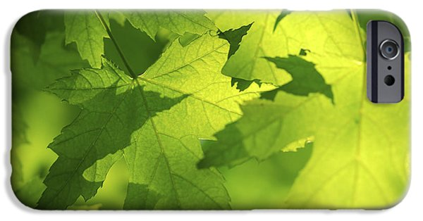 Leaves iPhone Cases - Green maple leaves iPhone Case by Elena Elisseeva