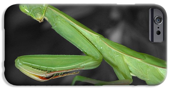 Mantises iPhone Cases - Green Mantis iPhone Case by Shane Bechler