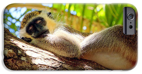 Cute Tree Images iPhone Cases - Green monkey sleeping on tree iPhone Case by Matteo Colombo