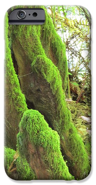 San Francisco Famous Photographers iPhone Cases - Green Moss iPhone Case by Mary Mikawoz