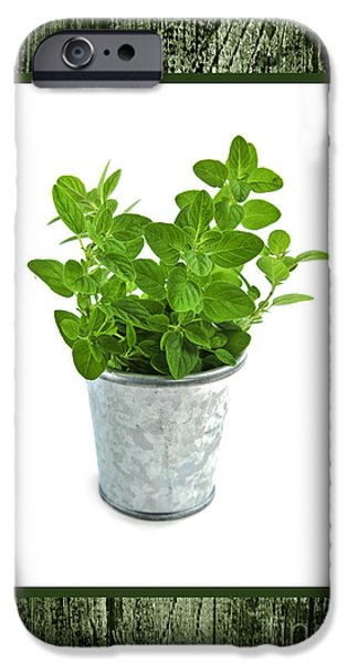 Pail iPhone Cases - Green oregano herb in small pot iPhone Case by Elena Elisseeva