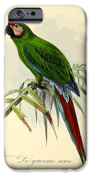 Parakeet iPhone Cases - Green Parrot iPhone Case by J G Keulemans