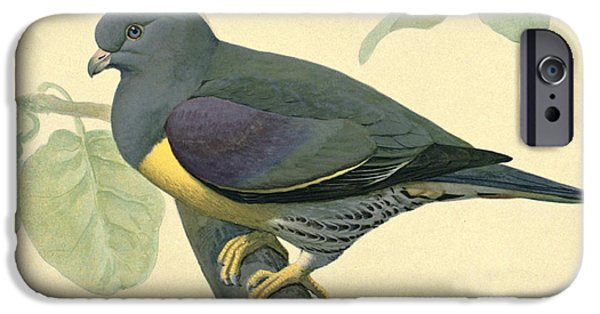 Ethiopia iPhone Cases - Green Pigeon iPhone Case by Louis Agassiz Fuertes