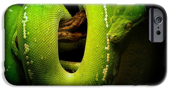 Photos Of Cats iPhone Cases - Green Python iPhone Case by Skip Willits