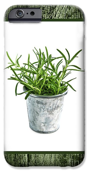 Pail iPhone Cases - Green rosemary herb in small pot iPhone Case by Elena Elisseeva