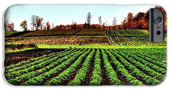 Alga iPhone Cases - Green Row Surprise - Canada iPhone Case by Jeremy Hall