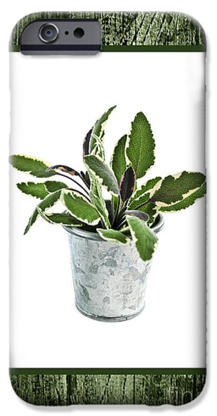 Pail iPhone Cases - Green sage herb in small pot iPhone Case by Elena Elisseeva