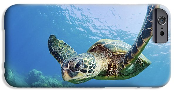 Printscapes - iPhone Cases - Green Sea Turtle - Maui iPhone Case by M Swiet Productions