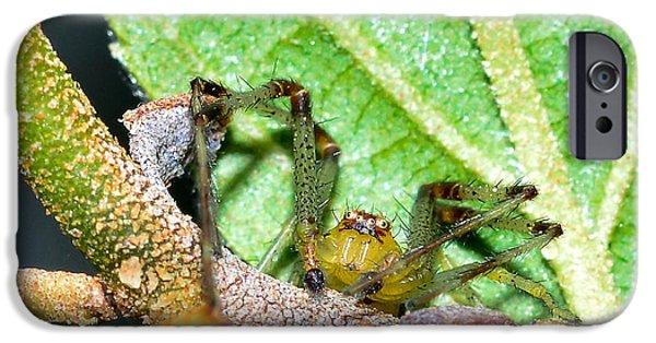 Arachnida iPhone Cases - Green spider iPhone Case by Toppart Sweden
