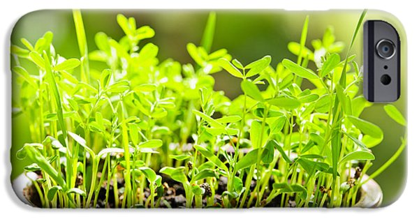 Flowerpot iPhone Cases - Green spring seedlings iPhone Case by Elena Elisseeva