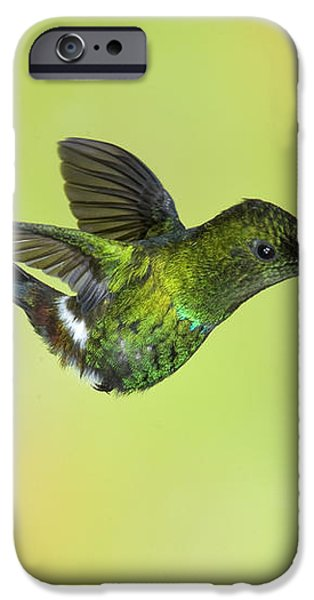 Green Thorntail Hummingbird iPhone Case by Anthony Mercieca